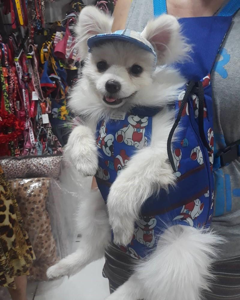 Moda-Pet-Creditos-Cantinho-do-Cachorro2